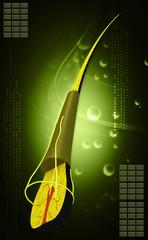 Human hair structure anatomy