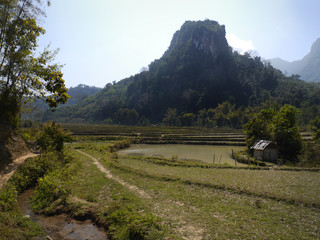 Jungle, mountains adn rice field. Muang Ngoi, LAO