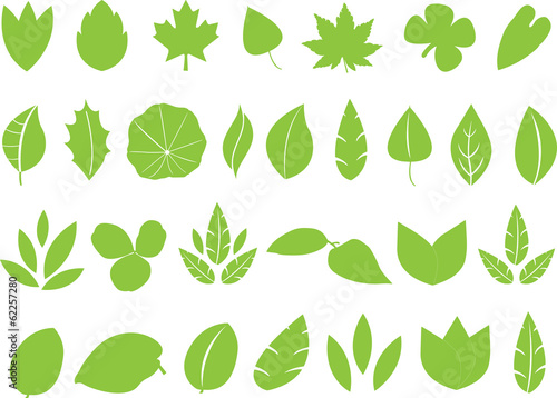 Large collection of green leafs illustrated on white