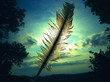 feather against the sunlight