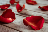 Close-up image of red rose petals