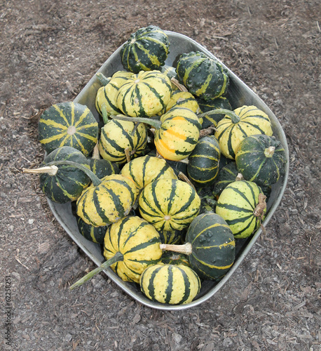 A Collection of Small Green and Yellow Pumpkins.