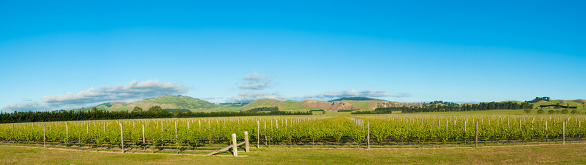 Winery of New Zealand