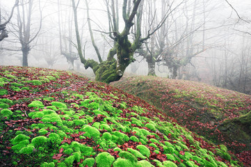 magical forest with vivid green moss
