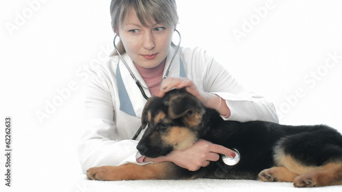 woman veterinarian examines puppy