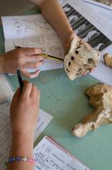 studio di ossa