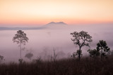 savanna with sunrise and fog