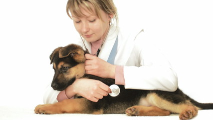 vet listening puppy through a stethoscope