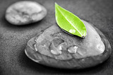 Fototapety Stones with green leaf
