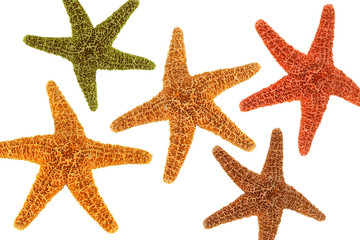 Five starfish