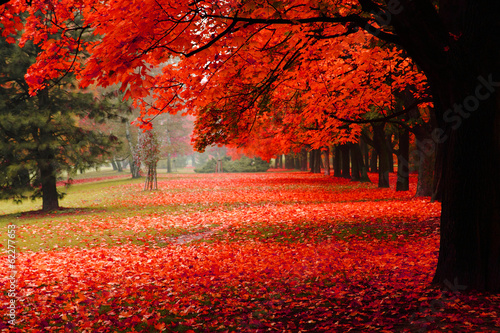 Deurstickers Bomen red autumn in the park