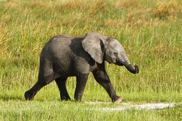 Kleiner Elefant rennt