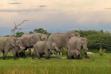 Elefantenherde mit Baby