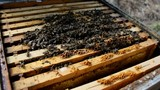 Bees And Hives ,bees in apiary,beehive,Beekeeper