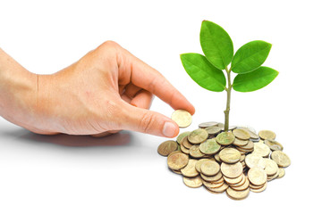 hand giving a golden coin to tree growing from coins / csr