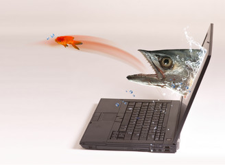 Computer Fishing.
