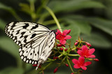 Butterfly in nature background environment