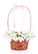 Beautiful snowdrops in basket, isolated on white
