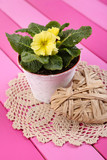 Yellow primrose in pot on color napkin on wooden background