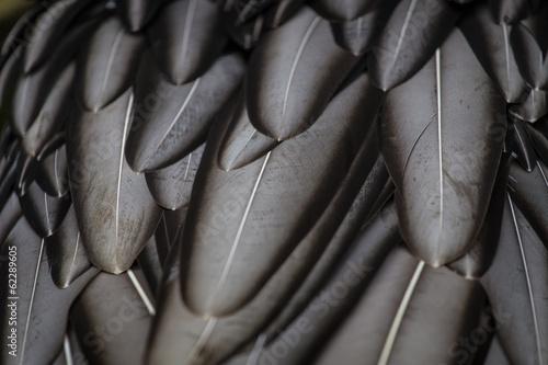 Tuinposter Papegaai feathers