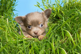 Puppy in high grass