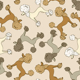 Seamless pattern of poodle dogs