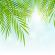 Palm leaves on sunny background