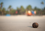 кокос пляж песок океан Lonely coconut on the beach near ocean
