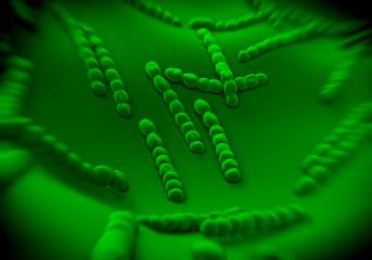 Streptococcus pneumoniae, bacteria artwork