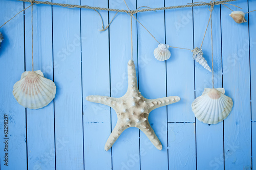 Starfish and shells hanging on boards