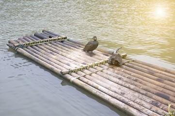 Cormorants and bamboo raft