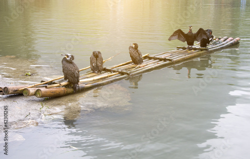 cormorants and bamboo raft
