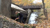 woman gathers maple leaves near fast flowing waterfall