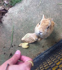 A Rabbit is Playing with a Hand of Human