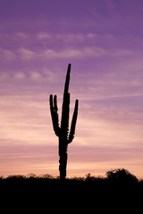 Lone Saguaro in the Sunset