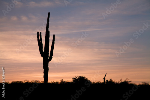 Saguaro in the Sunset