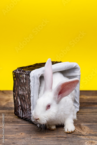Rabbit in wicker basket