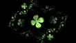 Shamrock, Green Four Leaf Clover On Black