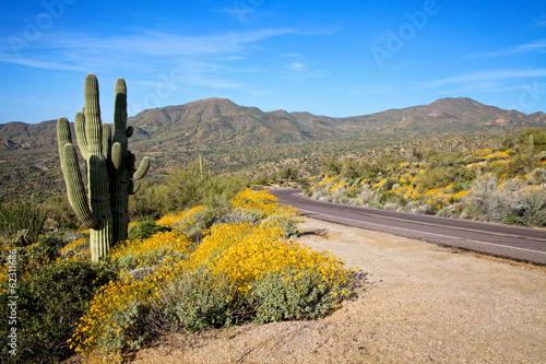 Road Through Desert in Spring - 62311686