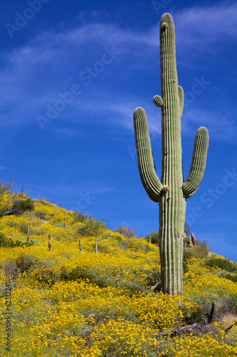 Arizona Desert in Spring - 62312241