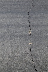 street in detail with cracked asphalt
