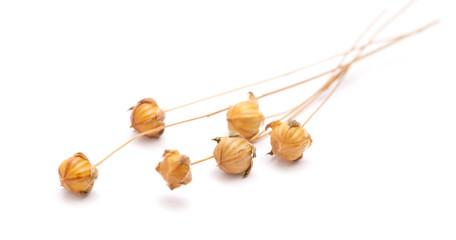 dry flax plant capsules