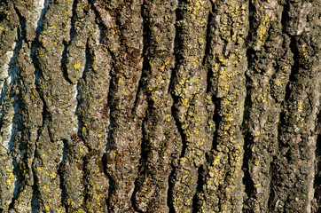The detail of the bark on the trunk of a large tree