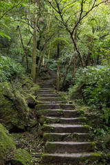 Long flight of stony stairs in a lush and verdant forest