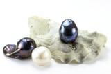 Auster mit Perlen