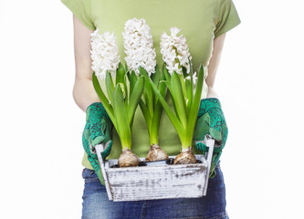 Young woman holding wooden box with hyacinth flowers isolated