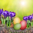 Frühjahrsblüher und Ostereier