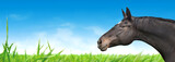Horse portrait on background of blue sky and green grass, banner