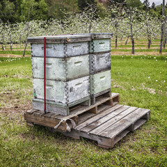 Orchard Beehives