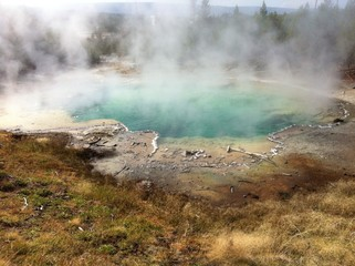 Yellowstone's Emerald Spring